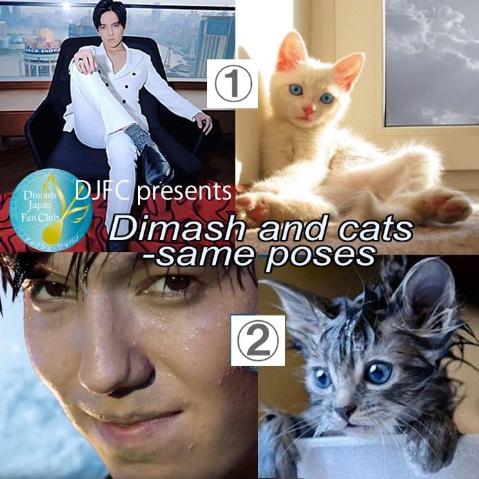 """""""Dimash and Cats"""": как японцы поднимают настроение во время карантина"""