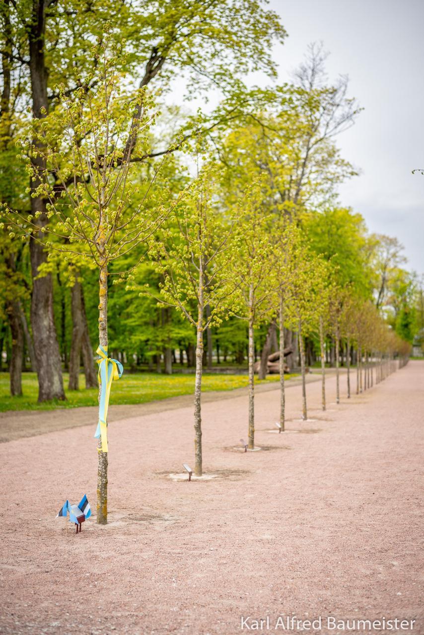 В Эстонии появилось дерево имени Димаша