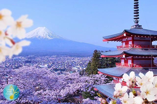 вид на гору Фудзи Япония цветение сакуры весна