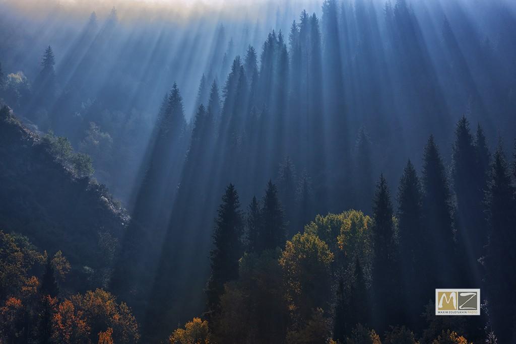 фото Максима Золотухина Казахстан горы деревья лучи