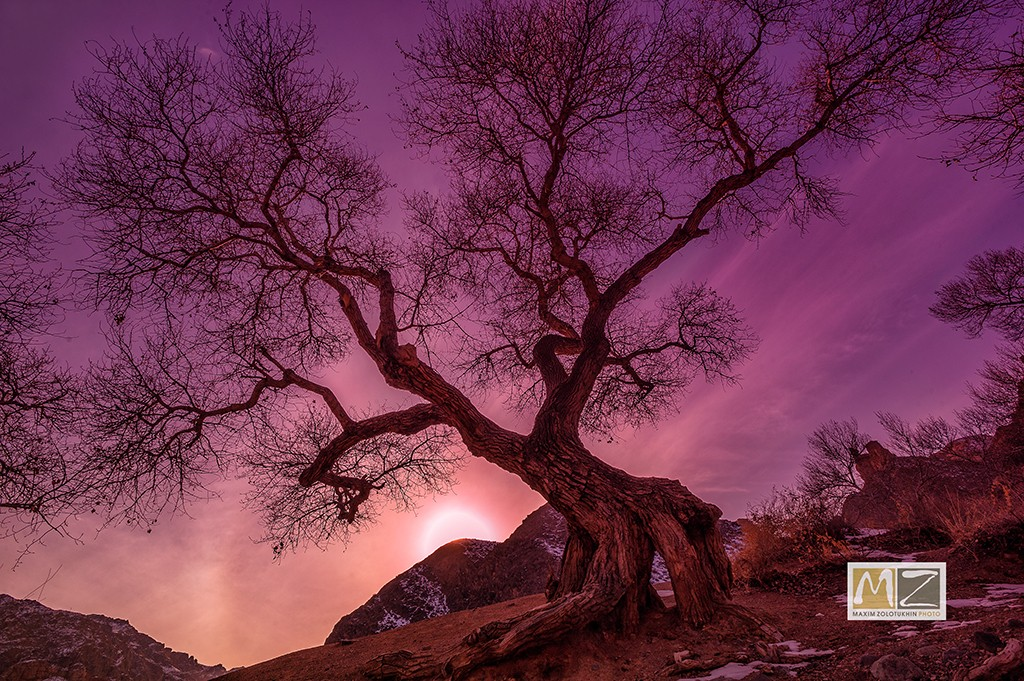 фото Максима Золотухина Казахстан дерево закат